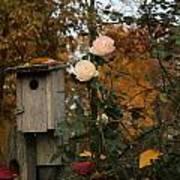 Roses Of Fall Art Print