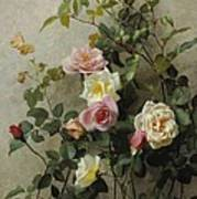 Roses On A Wall Art Print