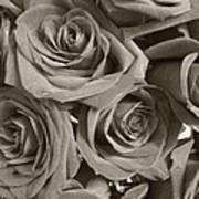 Roses On Your Wall Sepia Art Print