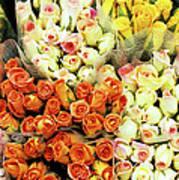 Roses 01 Art Print