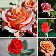 Roses Roses Roses I Thank All The Roses Art Print