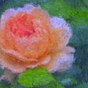 Roses Splendor Art Print