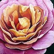 Rosy Dew Art Print
