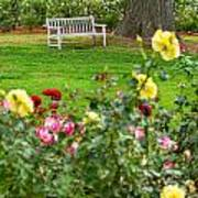 Rosy View - Beautiful Rose Garden Of The Huntington Library. Art Print