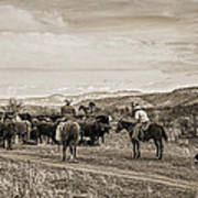 Rounding Up Cattle In Cornville Arizona Sepia Art Print