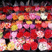 Rows Of Roses Art Print