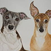 Roxie And Bruno The Greyhounds Art Print