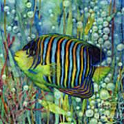 Royal Angelfish Art Print