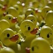 Rubber Ducks Art Print