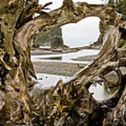 Ruby Beach Driftwood #3 Art Print