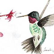Ruby Throated Hummingbird Art Print by Brenda Ruark
