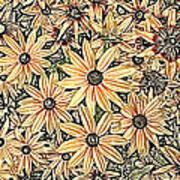 Rudbeckia - Rudbeckie Art Print