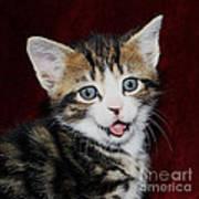 Rude Kitten Art Print