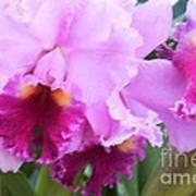 Ruffled Orchids Art Print