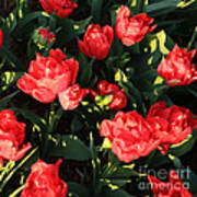 Ruffly Red Tulips Square Art Print