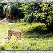 Run Cheetah Run 0 To 60 In 3 Seconds Art Print