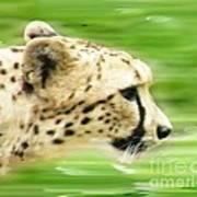 Run Cheetah Run Art Print