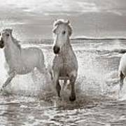 Run White Horses II Art Print