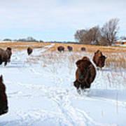 Running Buffalo Art Print