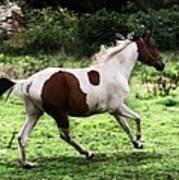 Running Pinto Horse Art Print