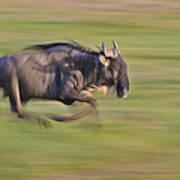 Running Wildebeest IIi Art Print