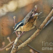 Runway Clear For Takeoff   Redbreasted Nuthatch Art Print