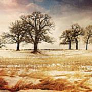 Rural Oaks Art Print
