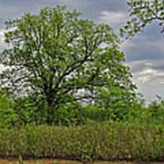 Rural Trees II Art Print