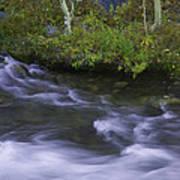Rushing Stream And Creek Bank - Eastern Sierra Art Print