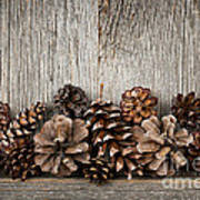 Rustic Wood With Pine Cones Art Print by Elena Elisseeva