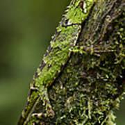 Sabah Eyebrow Lizard Mt Kinabalu Np Art Print by Ch'ien Lee