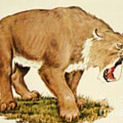 Sabretooth Cat Art Print