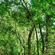 Sacred African Rainforest Art Print