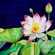 Sacred Lotus Art Print by Robert Hooper