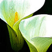 Sad Lillies Art Print