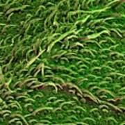 Sage Leaf Art Print