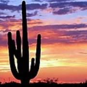 Saguaro At Sunset Art Print