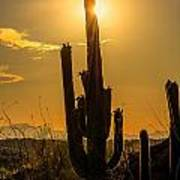 Saguaro Cactus 3 Art Print