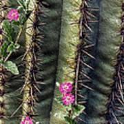 Saguaro Cactus And Wildflowers Art Print