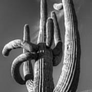 Saguaro Cactus Monochrome Art Print