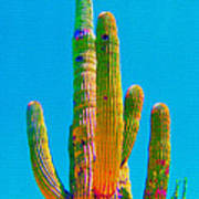Saguaro Colors Art Print