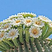 Saguaro Flowers On Top Art Print