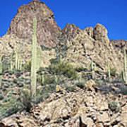 Saguaro On The Apache Trail Art Print