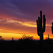 Saguaro Sunset II  Art Print