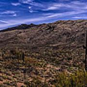 Saguaro View No.1 Art Print