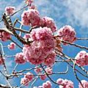Sakura Tree Blossoms Art Print