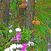 Sala Tree And Orchids At Buddhist University In Chiang Mai-thail Art Print