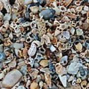 Sallie's Sea Shells Art Print