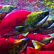 Salmon Run Art Print