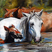 Salt River Foal Art Print